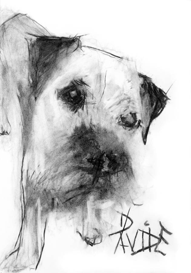 Valerie Davide original dog Otto